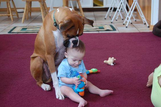 боксер и ребенок