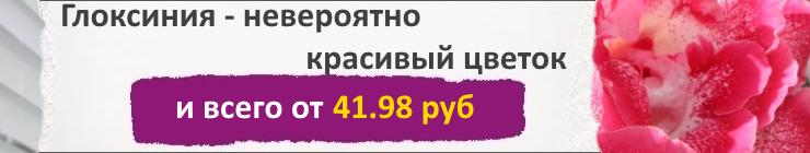 Купить Семена Глоксинии, цена низкая, доставка почтой наложенным платежом по России, курьером по Москве - интернет-магазин АгроБум
