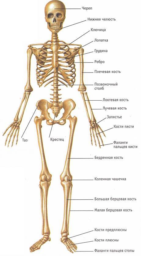 восстановление после эндопротезирования коленного сустава в санатории