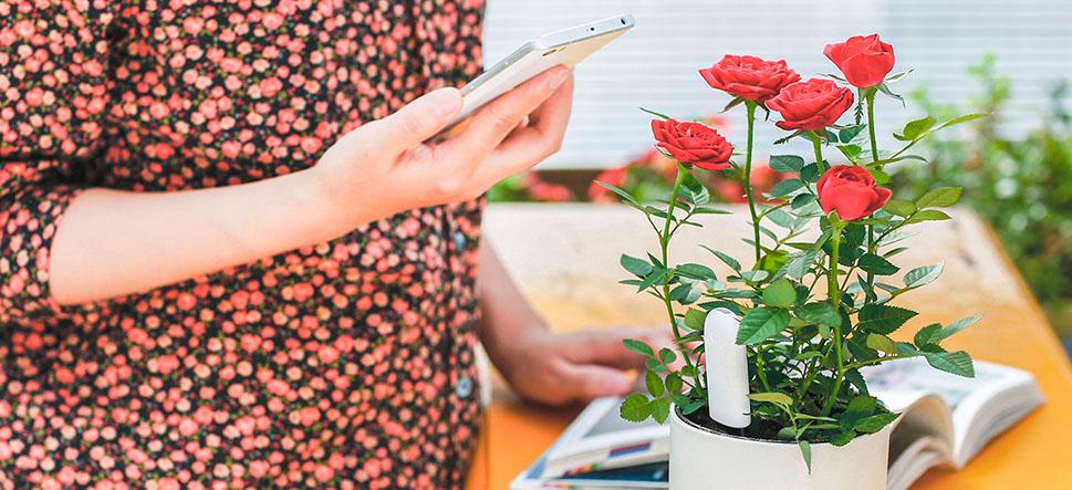 Flower Care поможет регулярно фиксировать развитие комнатных растений