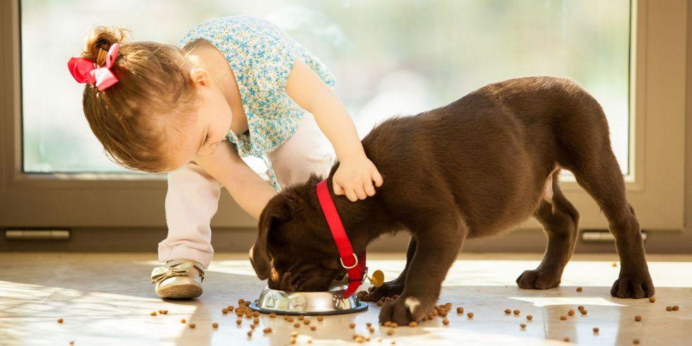 лабрадор ретривер - лучший выбор собаки для ребенка