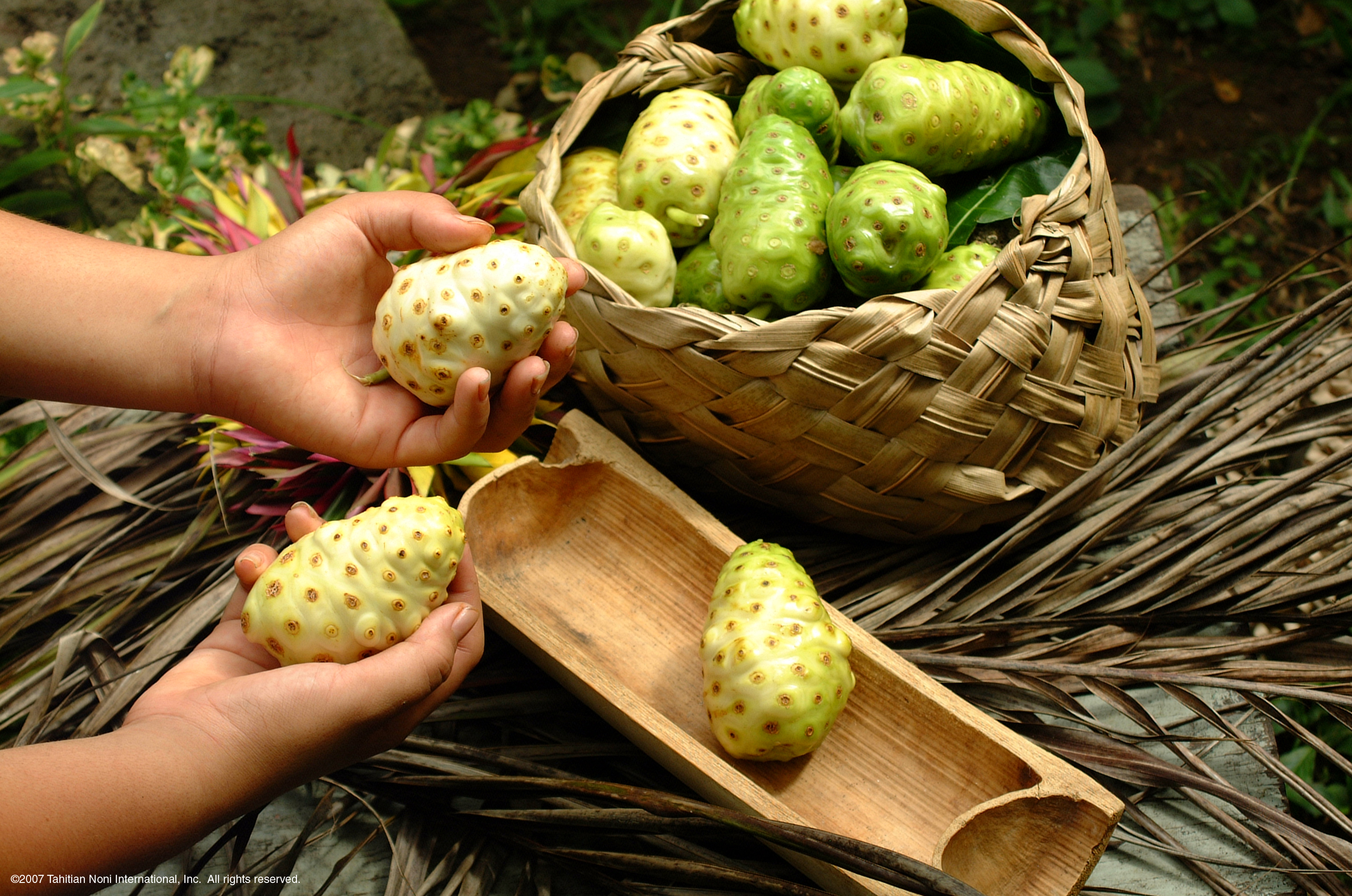 Noni-Fruit-Basket.jpg
