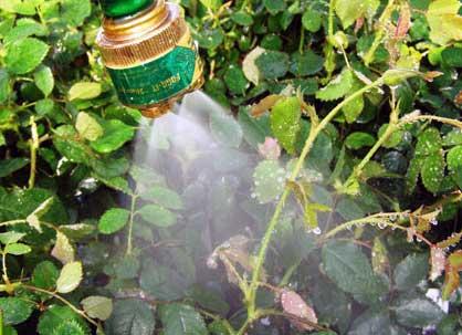 Борьба с вредителями и болезнями растений