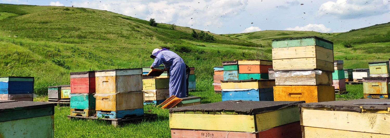 Мёд прямо с пасеки без посредников