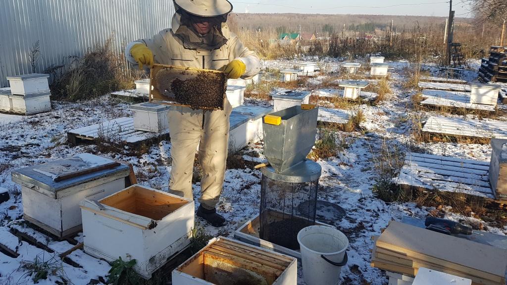 Стряхивание пчел в кассету 3