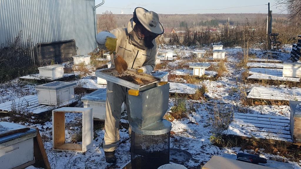 Стряхивание пчел в кассету 7