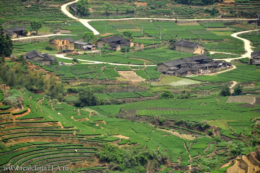 Чайная деревня в уезде Фудин.