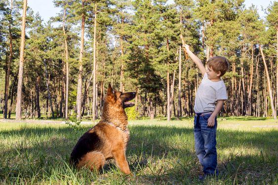 немецкая овчарка для вашего ребенка