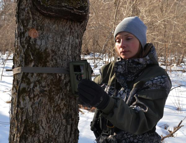 Сотрудник парка монтирует фотоловушку на дерево