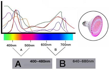 Спектральный диапазон фитолампы