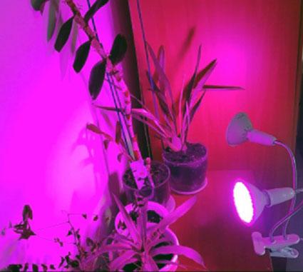 подсветка для рассады на подоконнике светодиодными фитолампами