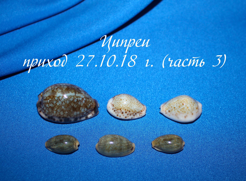 Новые коллекционные Ципреи