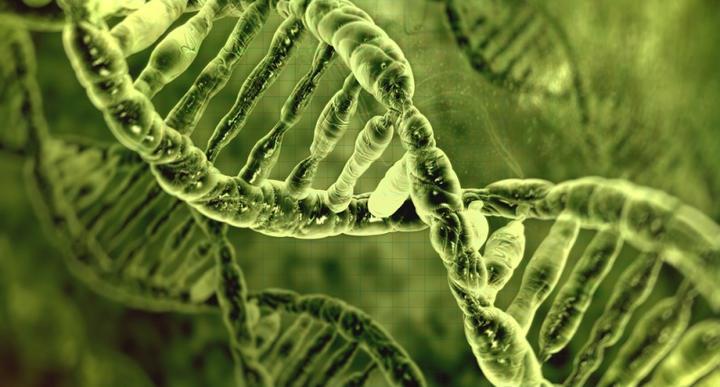 ДНК_чая_1.jpg