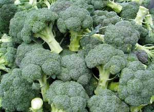 выращивание капусты брокколи