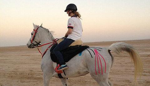 Кинесиотейпирование в лечении лошадей