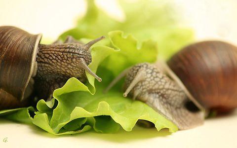Крем Snail: улиточный крем