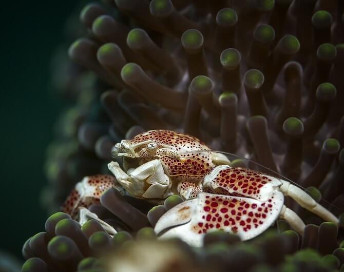 Как снимать макро под водой на GoPro