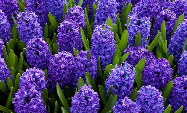 Символика популярных цветов.