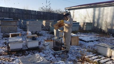 Сауна для пчел, или термообработка пчелосемей
