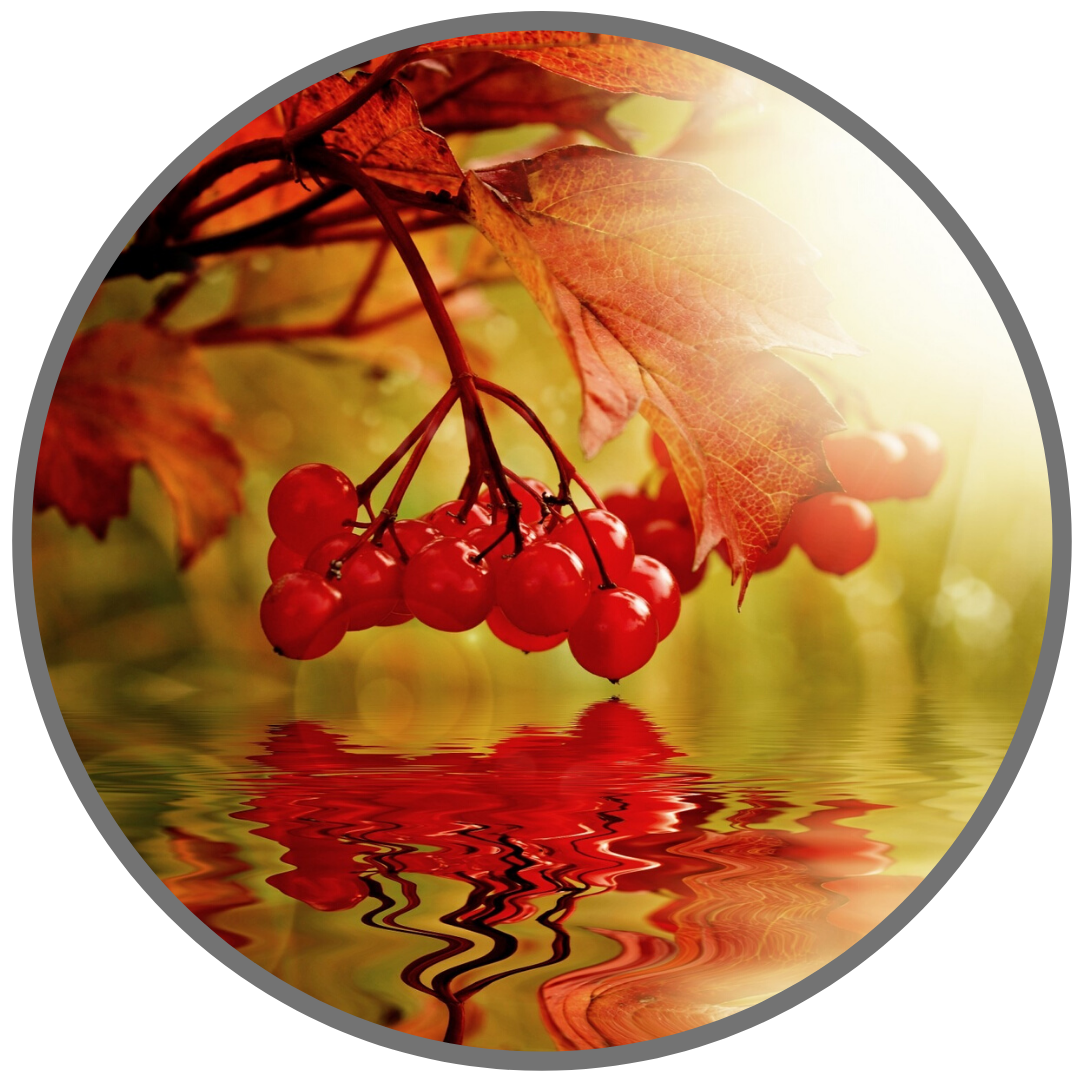Осенние каникулы - РЕЖИМ РАБОТЫ в ноябре 2019 года