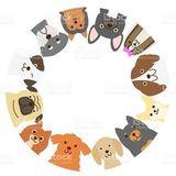 12 самых маленьких пород собак в мире