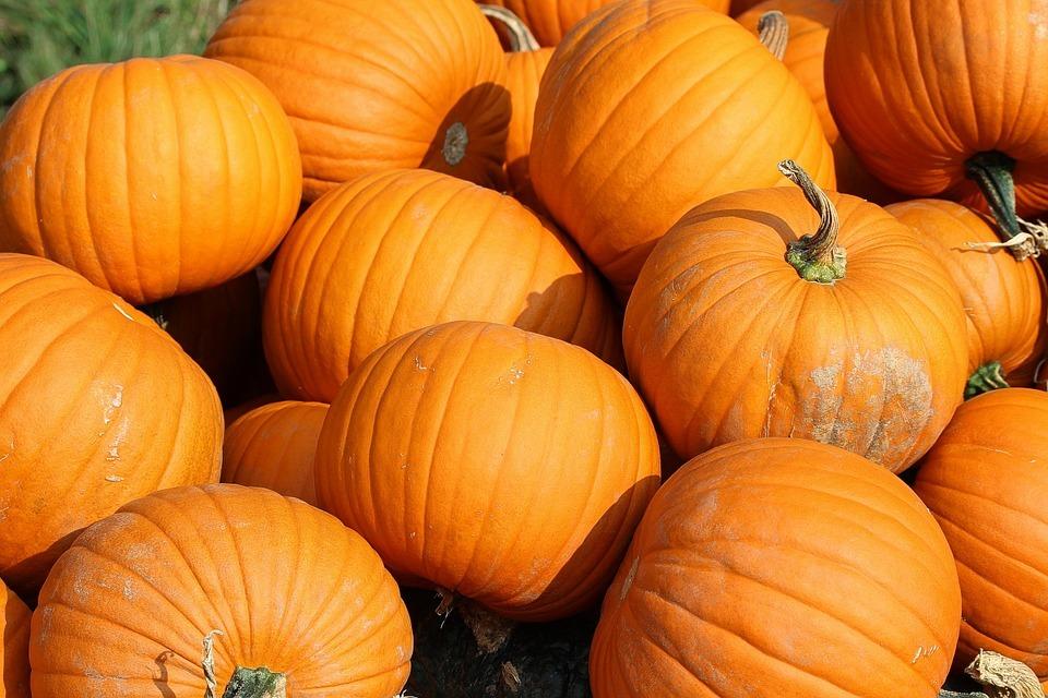 Сезонный продукт: польза тыквы