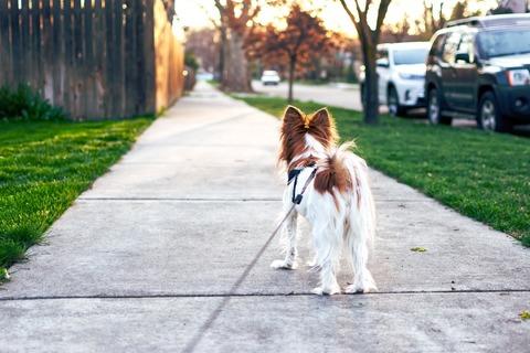 Советы как выгуливать собак.