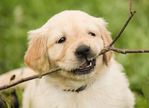Можно ли отучить щенка кусаться?