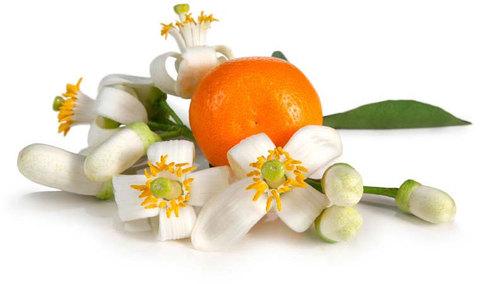 Эфирное масло бигарадии (горький апельсин)
