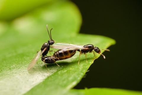 Как поймать муравьиную матку