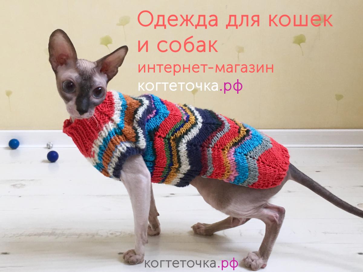 Новый каталог одежды для кошек и собак и как выбрать размер?