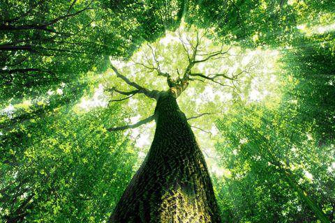 Что такое здоровый деревянный дом