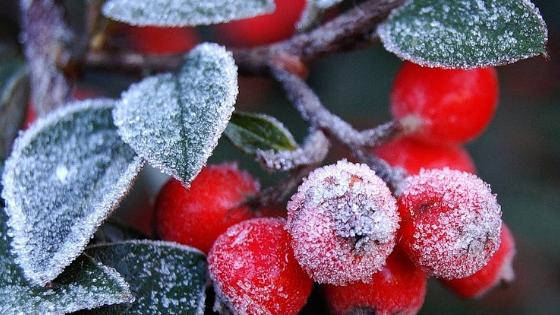 Особенности ухода зимой