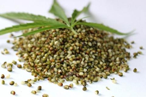 Вред каши из конопли семена канабиса в москве
