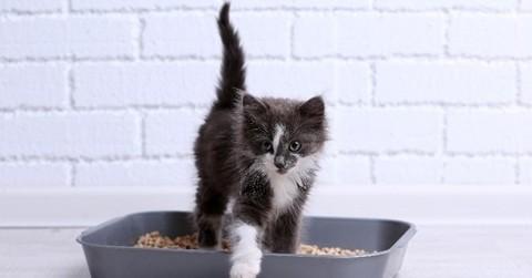 Как отучить кошку гадить в неположенном месте и как приучить кошку к лотку?