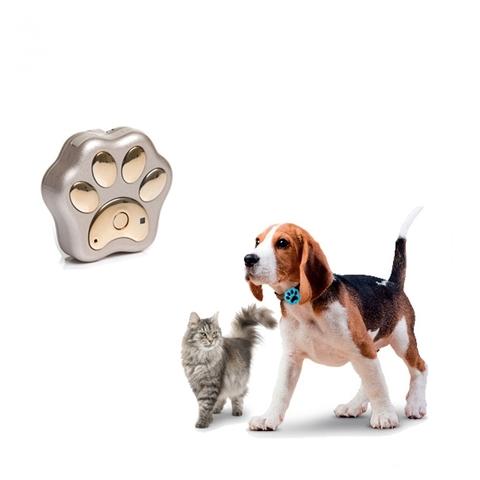 Как искать пропавшую собаку