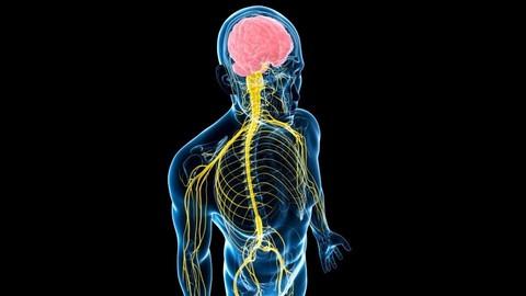 Почему фасциальную сеть называют 6-ым органом чувств?