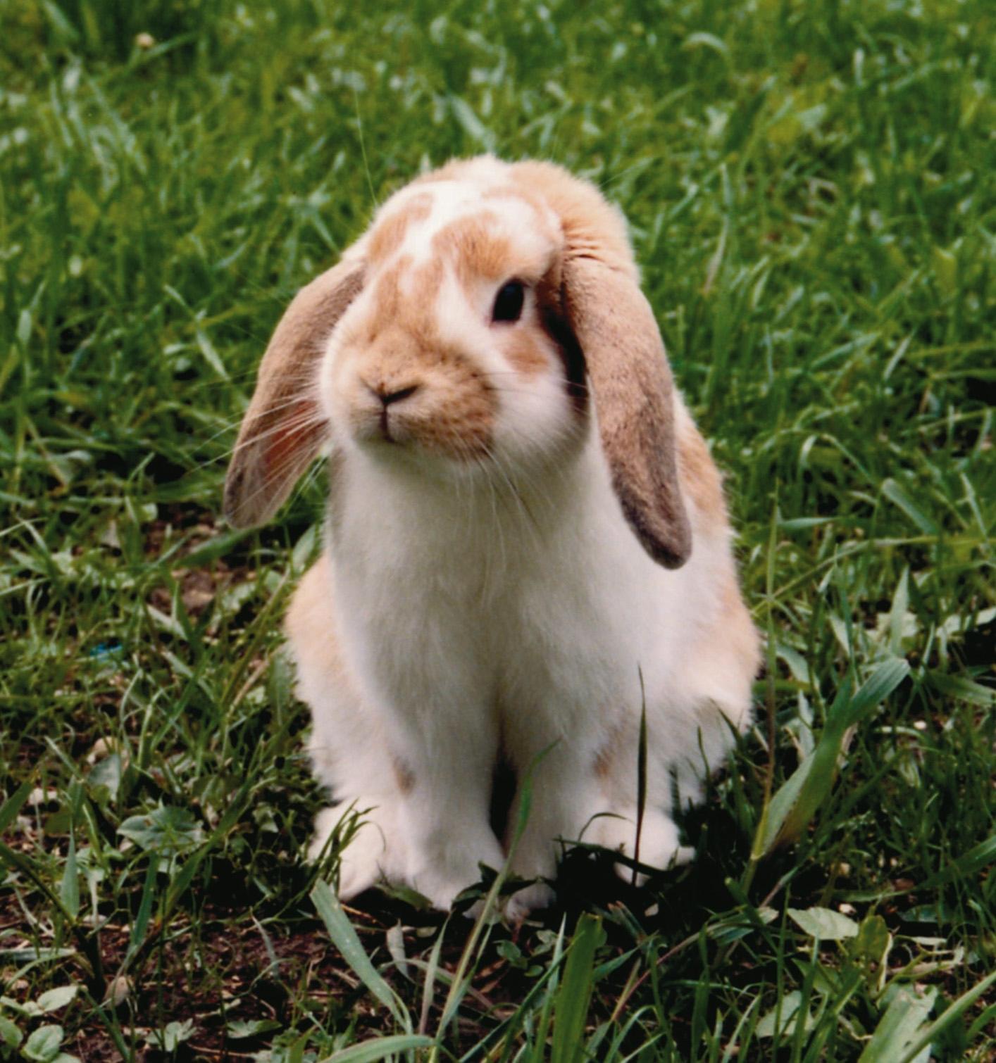 Какого размера должна быть клетка для кроликов