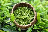 Зеленый чай сорта самые лучшие какие