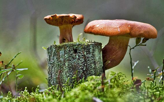 Роль грибов и насекомых в природе