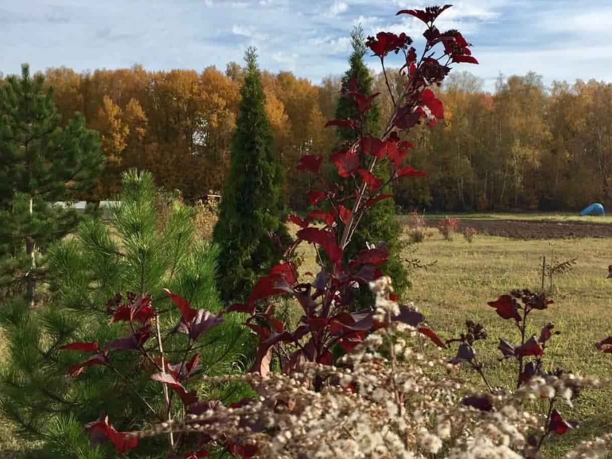 Осень в «Романовском Парке»