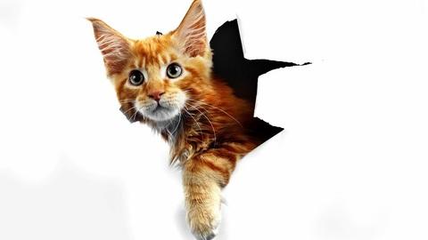 Что делать, если кошка или кот дерет обои и диван? Как отучить драть обои и мебель?