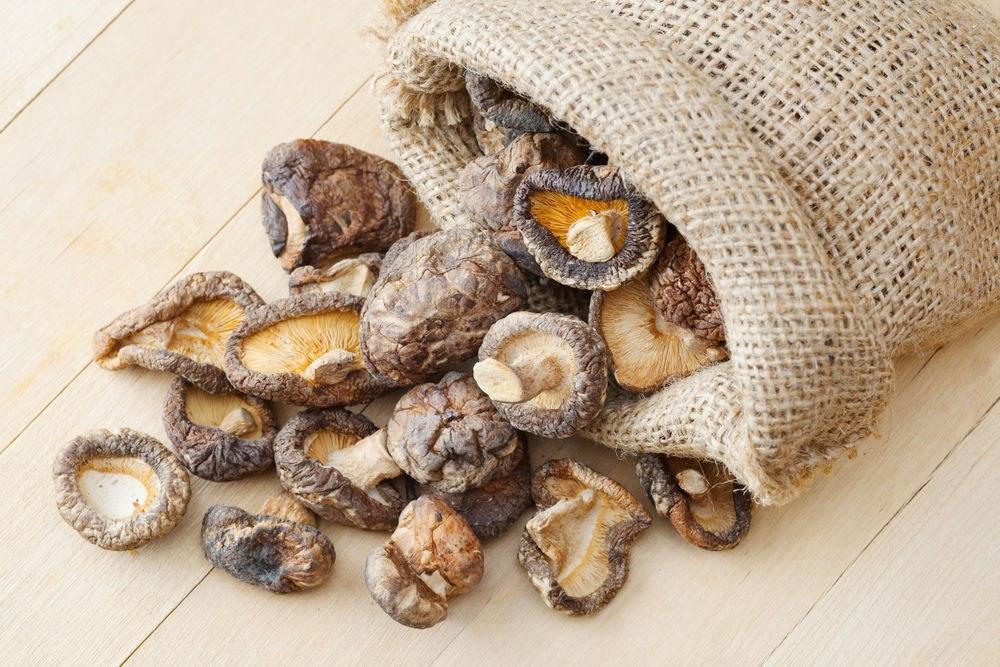 Лечебные свойства грибов
