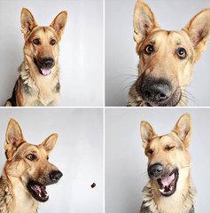 Фотосессия собаки
