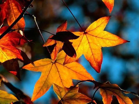 Очарованные осенью или золотая осень в разных уголках мира. Интересные факты и фото