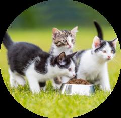 Чем кормить котят