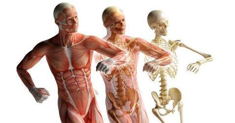 Каким же образом фасция может влиять на боль в спине?