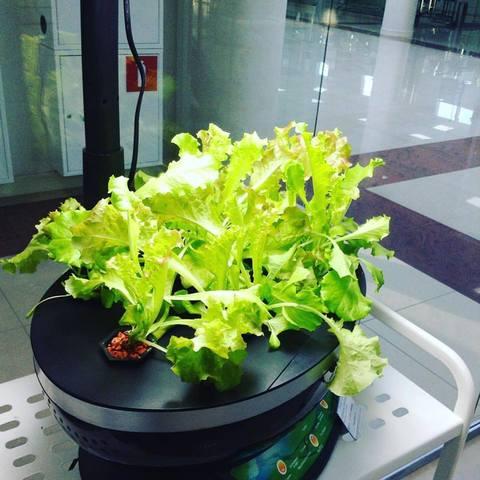 Тест  робот-сад (домашний сад)