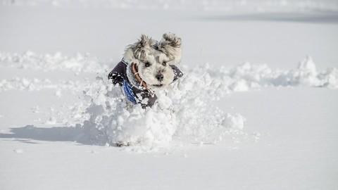 Как заботиться за лапами, шерстью и носом вашей собаки зимой