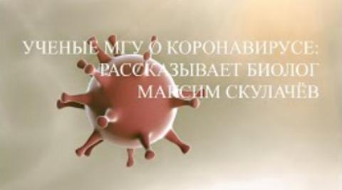 Максим Скулачев о коронавирусе и разработке лекарств против COVID-19